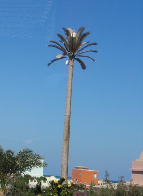 El Gouna, Ägypten: Keine Palme, sondern ein gut getarnter Handy-Funkmast.
