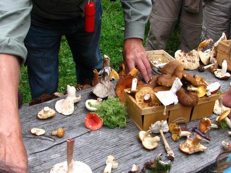 Pilzseminar im Rothauser Land / (c) Rothauser Land