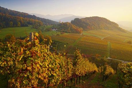 Herbststimmung im Schwarzwald / (c) by Erich Spiegelhalter & STG