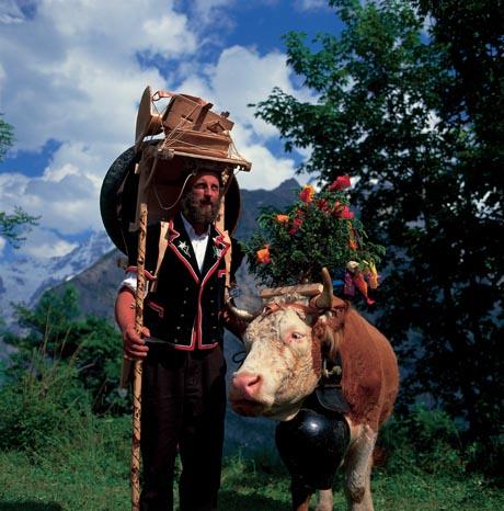 Senn mit Kuh, festlich geschmueckt beim Alpabzug in Muerren, Berner Oberland. Bild: Schweiz Tourismus / swiss-image.ch/Walter Storto