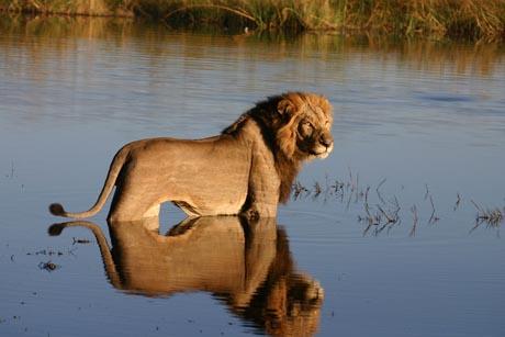 Die Naturparks, Wildreservate und Schutzgebiete Botswanas sind Zufluchtsorte für viele bedrohte Tierarten. Foto: djd/Botswana Tourism Organisation