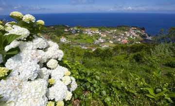 Die Azoren: ein Paradies für wild wachsende Hortensien. Bild: Wikinger-Reisen