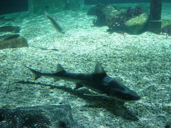 Ein Hai im SEA LIFE. Bild: Thorsten Reimnitz