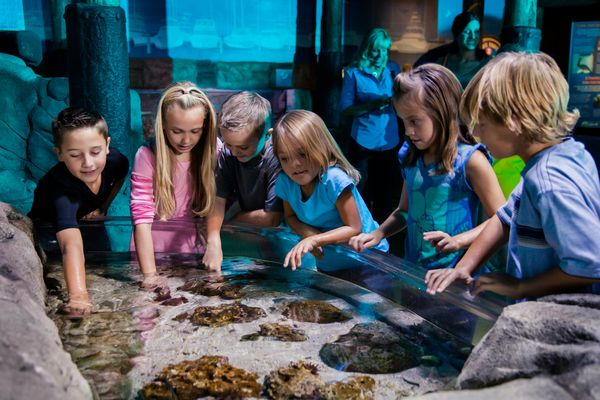 Fischinventur im SEA LIFE Speyer. Bild © 2015 Merlin Entertainments Group Deutschland GmbH