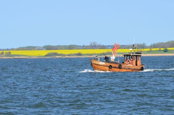 Wenn im Frühjahr auf Rügen die Rapsfelder leuchtend gelb blühen, ist eine Radtour rund um die Boddengewässer besonders reizvoll. Foto: djd/www.seepark-sellin.de