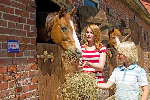 Niedersachsen: Für viele Urlaubskinder liegt das Glück der Erde auf dem Rücken der Pferde. Foto: djd/TMN/Jalag Syndication/Philip Koschel