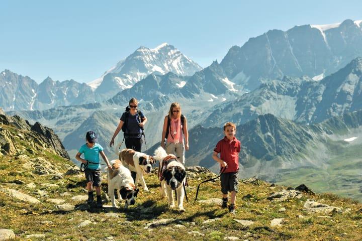 Wandern mit Bernhardiner im Wallis. Bild (c)  Schweiz Tourismus