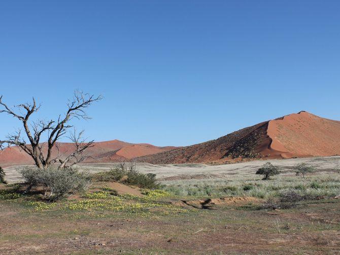 Das Sossuvlei Tal bietet mit seinen sternförmigen Dünen ein einmaliges Naturerlebnis. Bild: TerraVista Erlebnisreisen