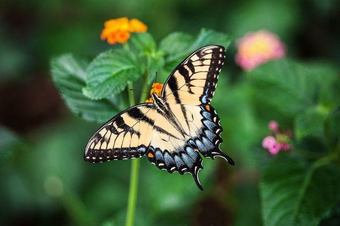 Der Schmetterlingsdschungel des Zoos Krefeld. Bild: pixabay / via Travelcircus
